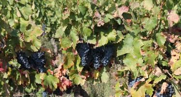 Op wijnreis door de Provence in oktober.